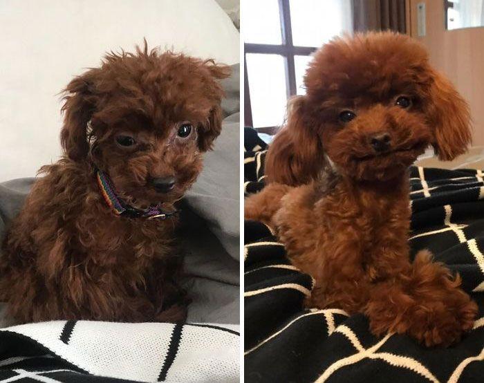 32 fotos de cachorros antes e depois da adoção que derreterão seu coração 30