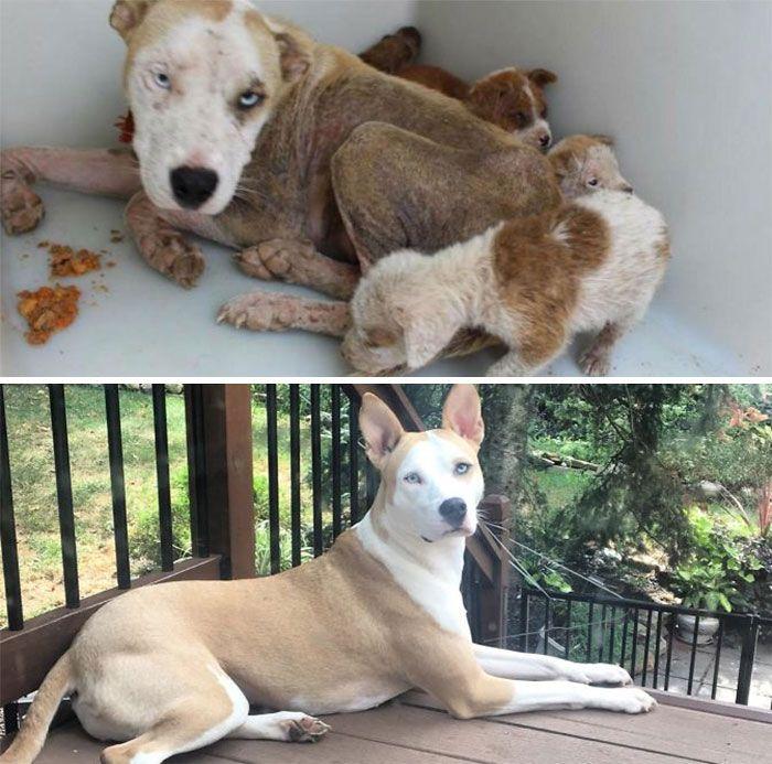 32 fotos de cachorros antes e depois da adoção que derreterão seu coração 31