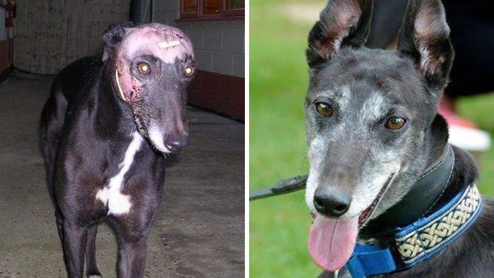 32 fotos de cachorros antes e depois da adoção que derreterão seu coração 32