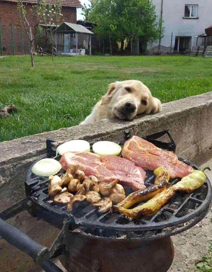 19 fotos que mostram o amor dos cachorros pela comida 11