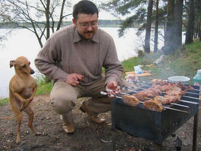 19 fotos que mostram o amor dos cachorros pela comida 14