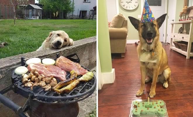 19 fotos que mostram o amor dos cachorros pela comida 3