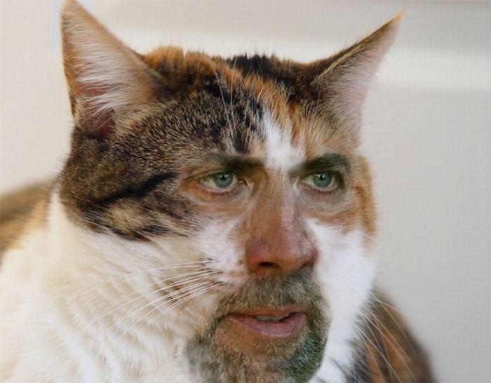 Nicolas Cage em todos os lugares (22 fotos) 5