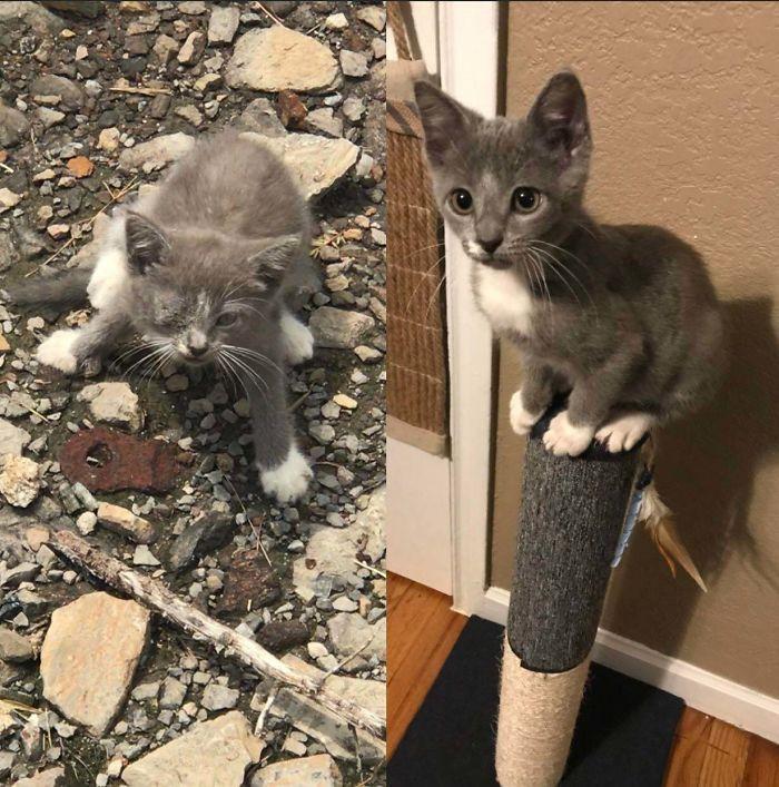 O poder do amor: 32 gatos antes e depois da adoção 3