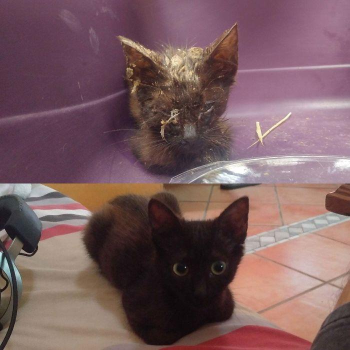 O poder do amor: 32 gatos antes e depois da adoção 4