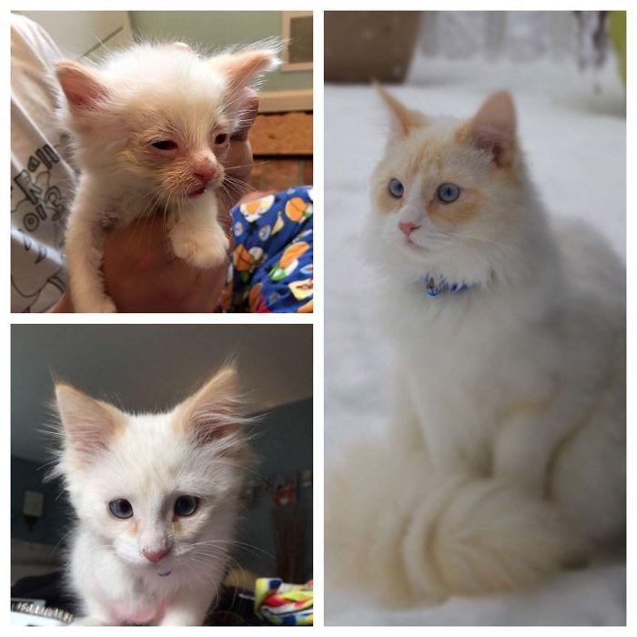 O poder do amor: 32 gatos antes e depois da adoção 5