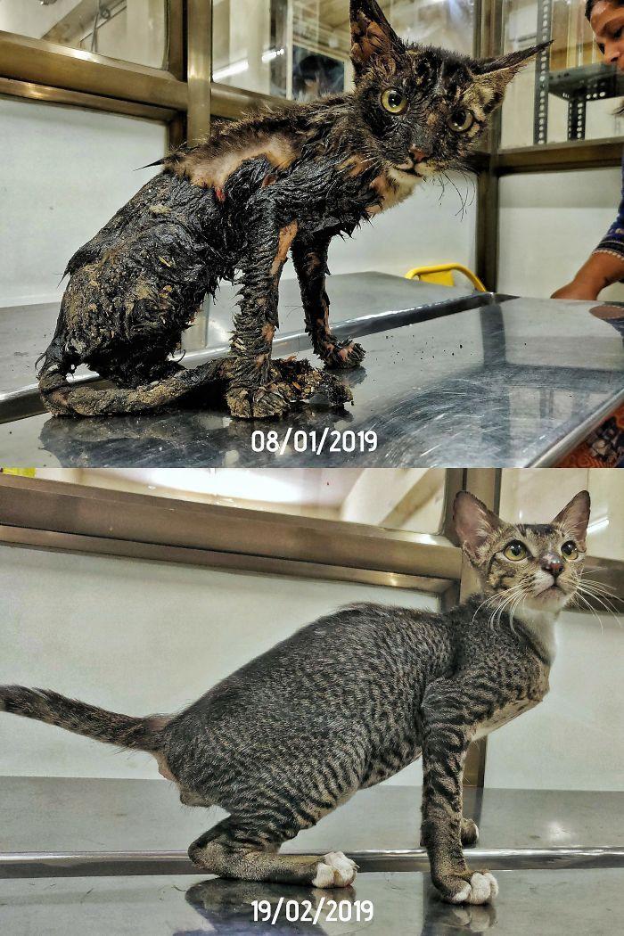 O poder do amor: 32 gatos antes e depois da adoção 7