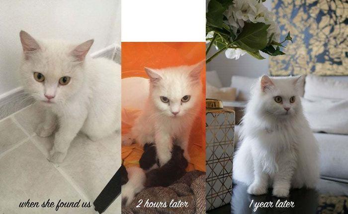 O poder do amor: 32 gatos antes e depois da adoção 8