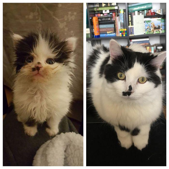 O poder do amor: 32 gatos antes e depois da adoção 10