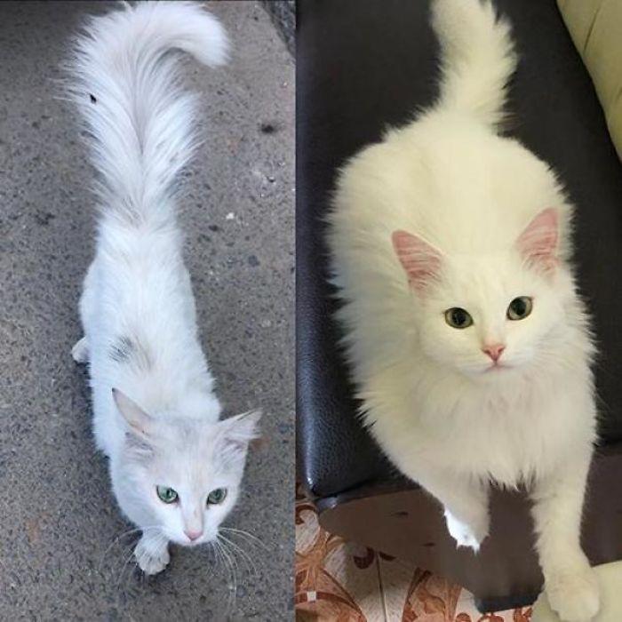 O poder do amor: 32 gatos antes e depois da adoção 14