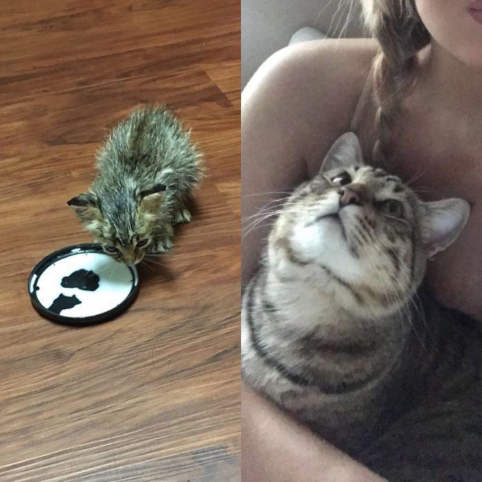 O poder do amor: 32 gatos antes e depois da adoção 15