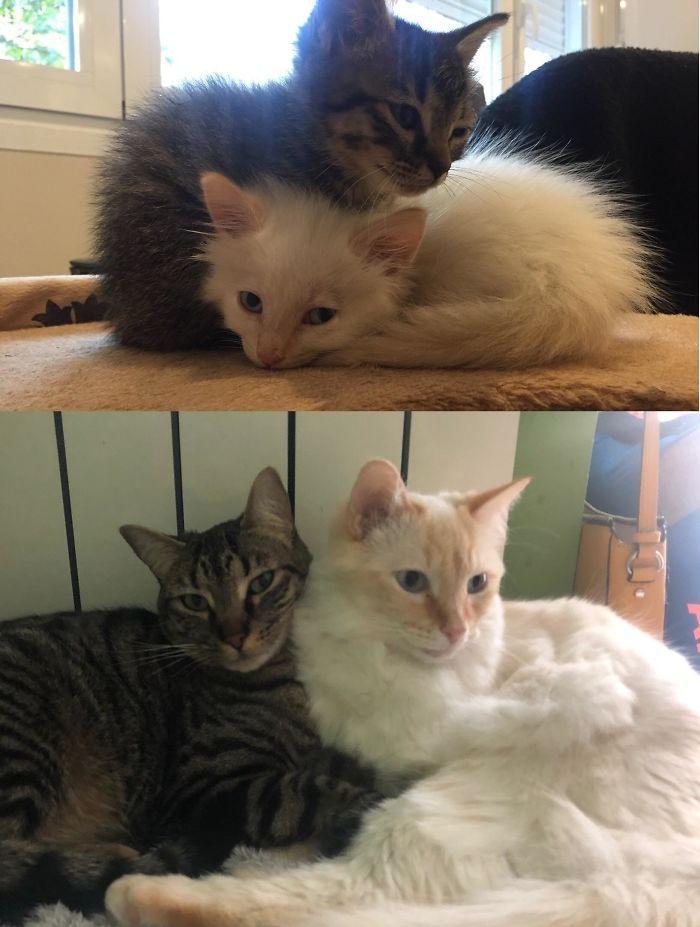 O poder do amor: 32 gatos antes e depois da adoção 17