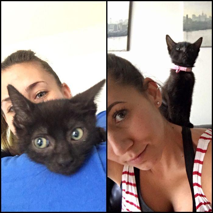 O poder do amor: 32 gatos antes e depois da adoção 18