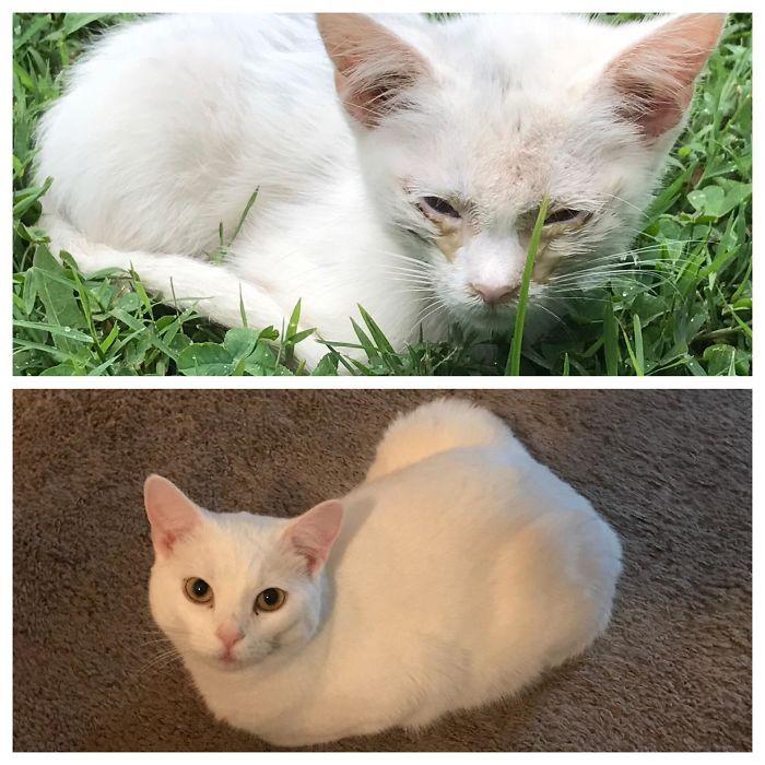 O poder do amor: 32 gatos antes e depois da adoção 19