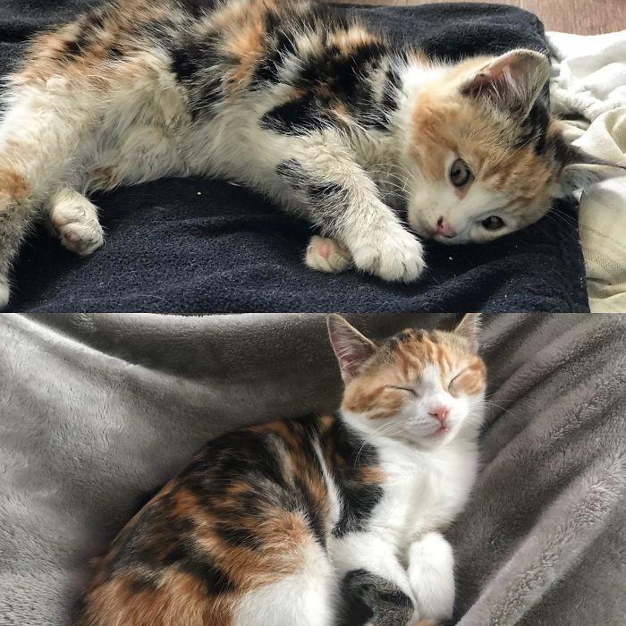 O poder do amor: 32 gatos antes e depois da adoção 20