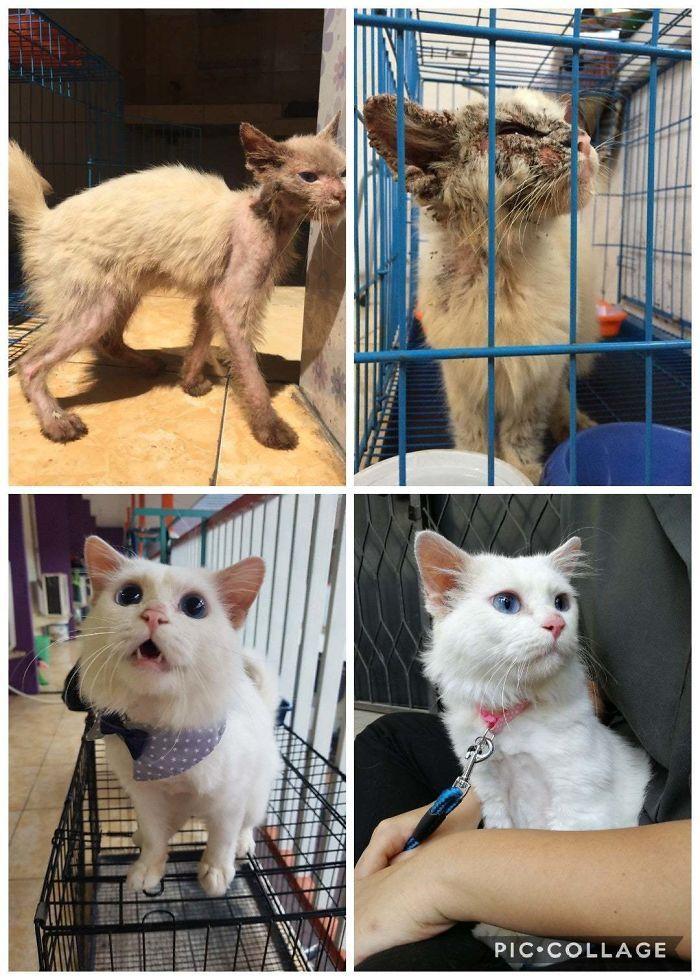 O poder do amor: 32 gatos antes e depois da adoção 21
