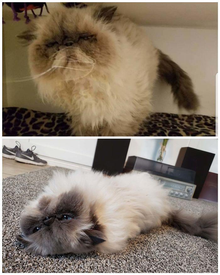 O poder do amor: 32 gatos antes e depois da adoção 22