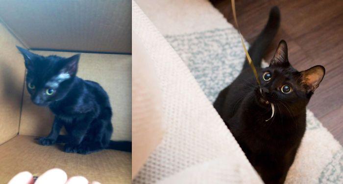 O poder do amor: 32 gatos antes e depois da adoção 23