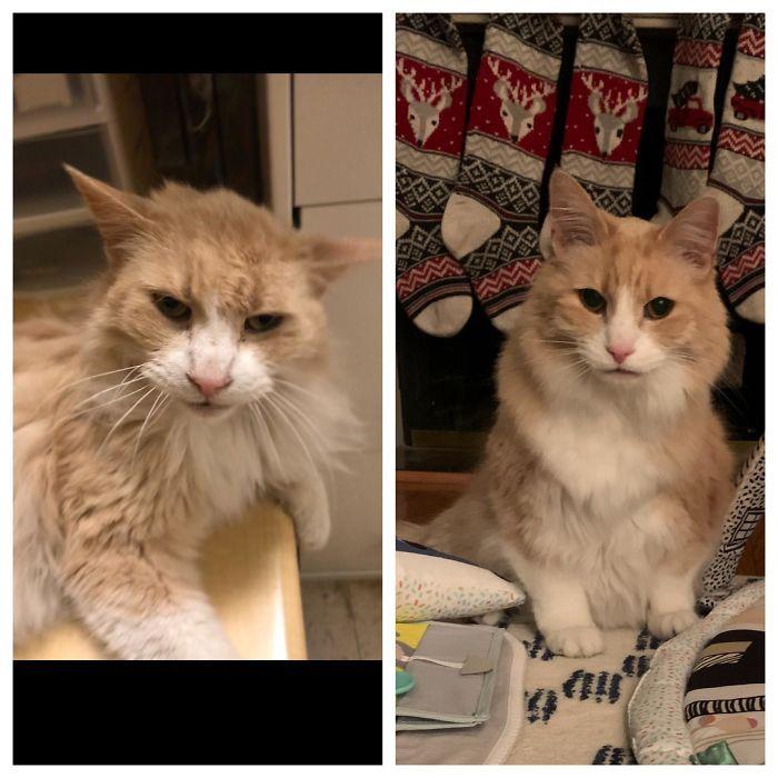 O poder do amor: 32 gatos antes e depois da adoção 25