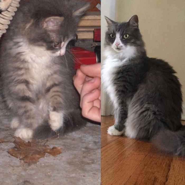 O poder do amor: 32 gatos antes e depois da adoção 26
