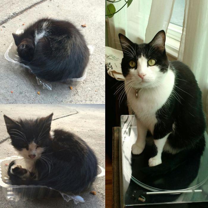 O poder do amor: 32 gatos antes e depois da adoção 27