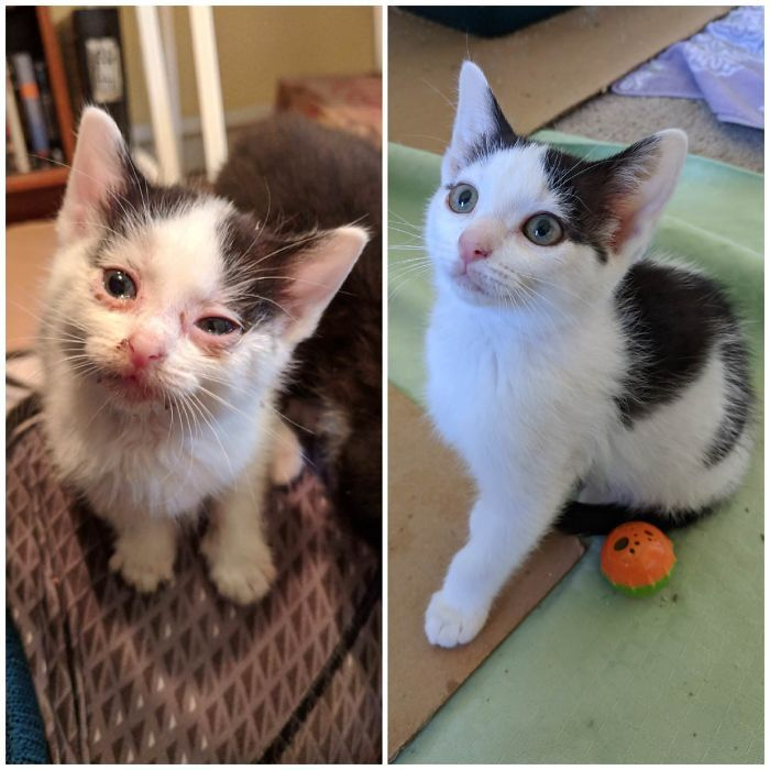 O poder do amor: 32 gatos antes e depois da adoção 29