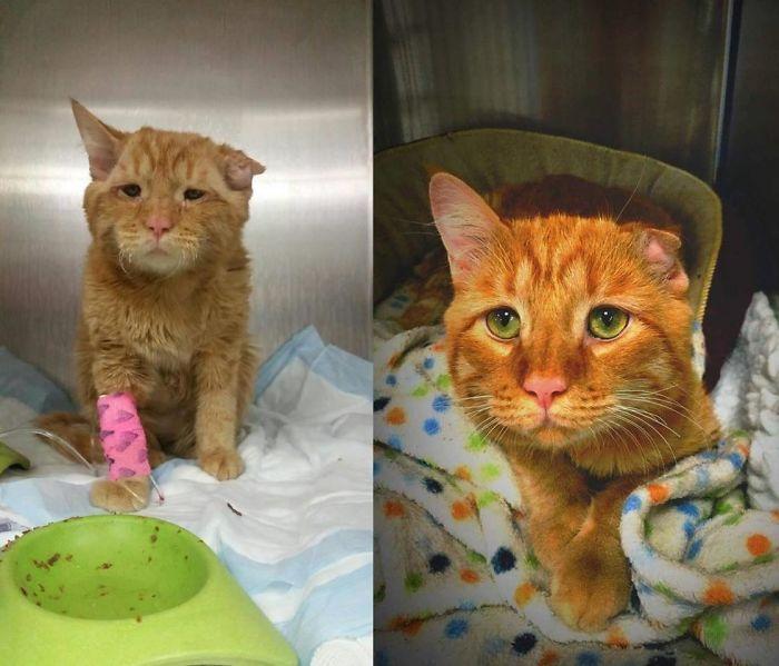 O poder do amor: 32 gatos antes e depois da adoção 30