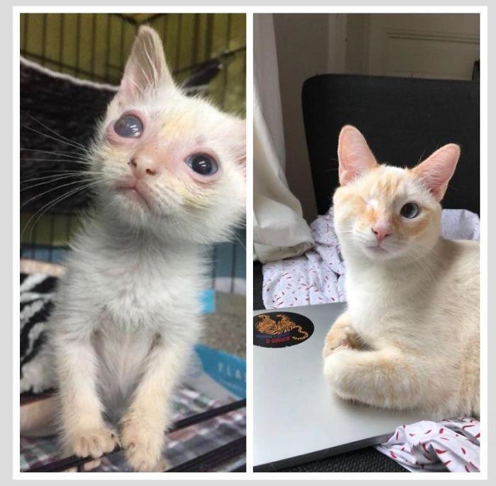 O poder do amor: 32 gatos antes e depois da adoção 32