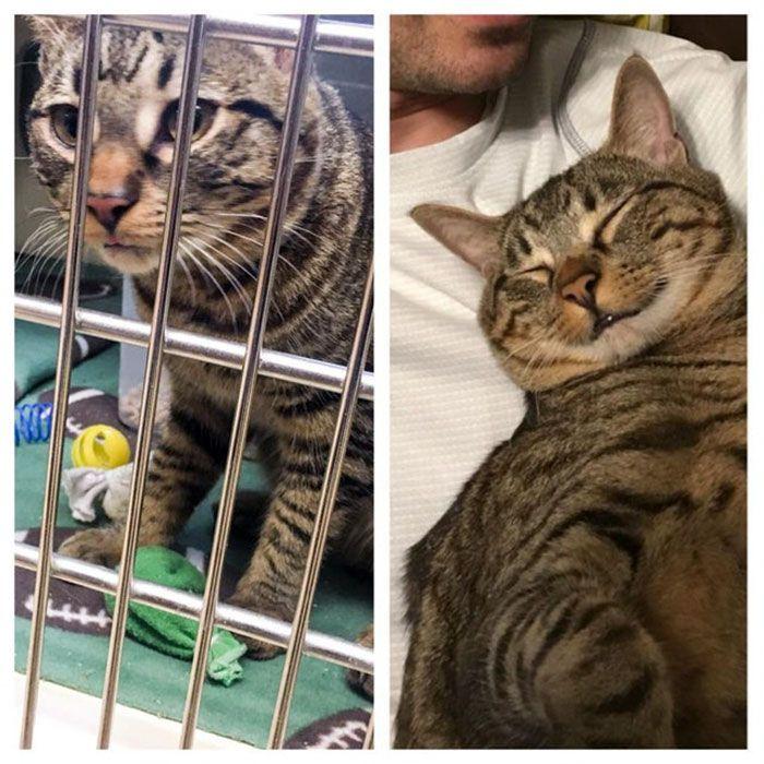 O poder do amor: 32 gatos antes e depois da adoção 33