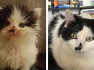 O poder do amor: 32 gatos antes e depois da adoção 6