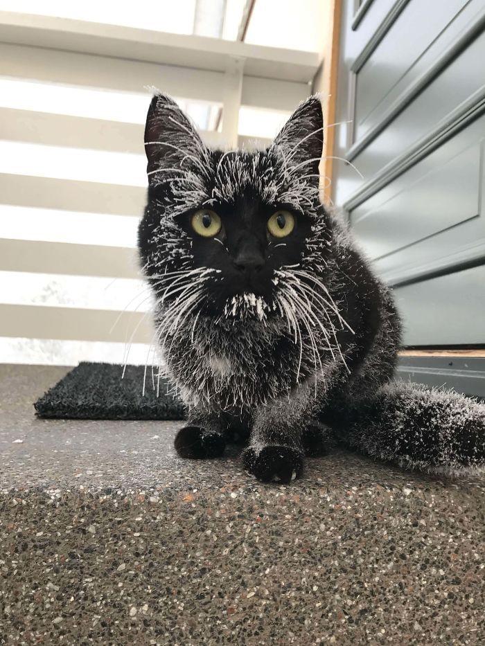 35 adorável gato preto, fotos para mostrar que eles não são má sorte 2