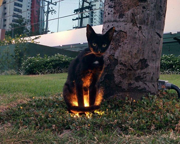 35 adorável gato preto, fotos para mostrar que eles não são má sorte 3