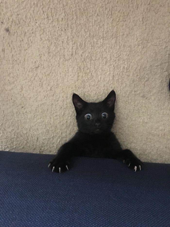 35 adorável gato preto, fotos para mostrar que eles não são má sorte 4