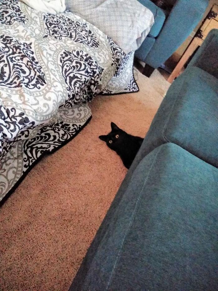 35 adorável gato preto, fotos para mostrar que eles não são má sorte 5