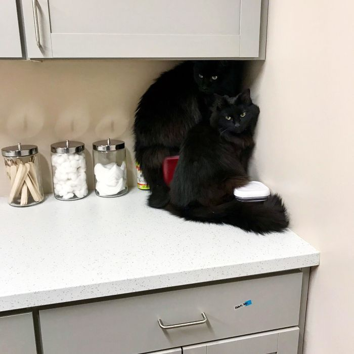 35 adorável gato preto, fotos para mostrar que eles não são má sorte 6
