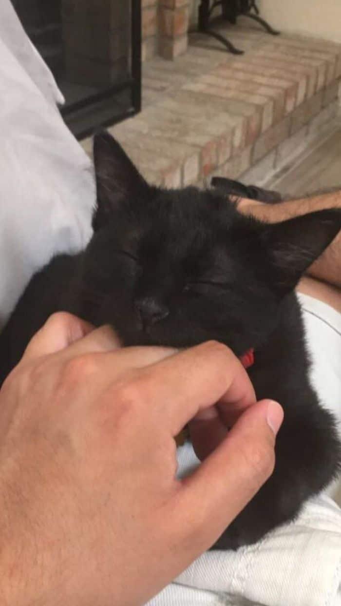 35 adorável gato preto, fotos para mostrar que eles não são má sorte 7