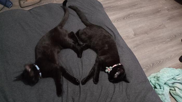35 adorável gato preto, fotos para mostrar que eles não são má sorte 10