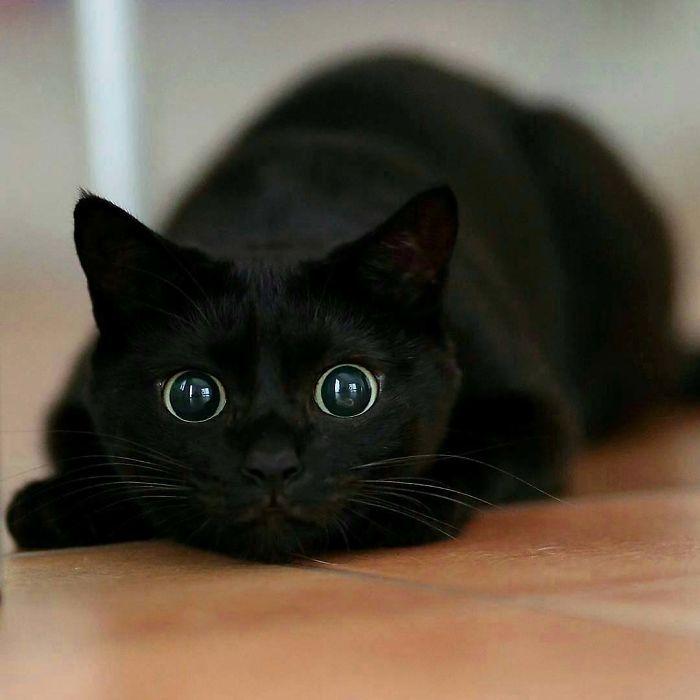 35 adorável gato preto, fotos para mostrar que eles não são má sorte 13