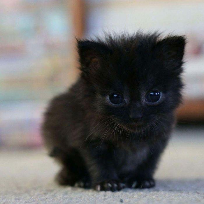 35 adorável gato preto, fotos para mostrar que eles não são má sorte 14