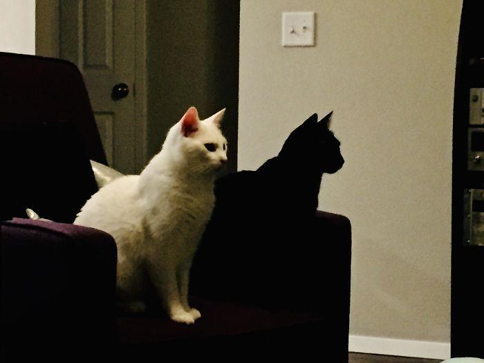 35 adorável gato preto, fotos para mostrar que eles não são má sorte 17