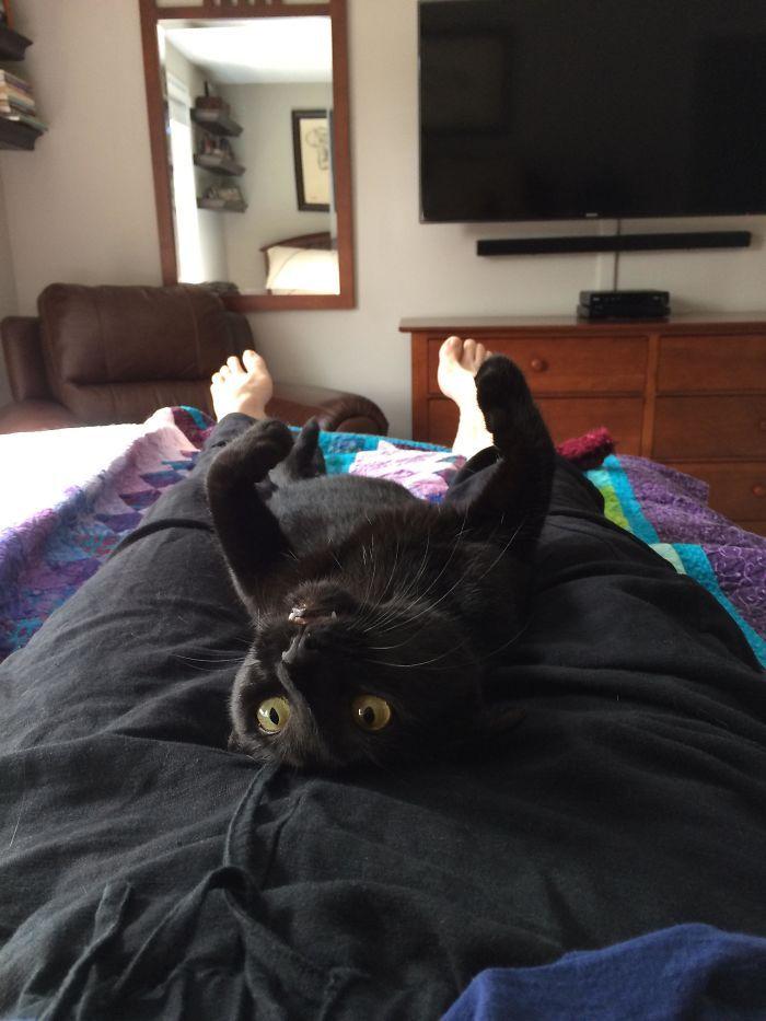 35 adorável gato preto, fotos para mostrar que eles não são má sorte 18