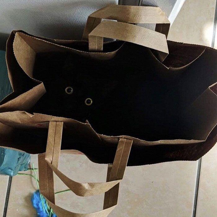 35 adorável gato preto, fotos para mostrar que eles não são má sorte 19