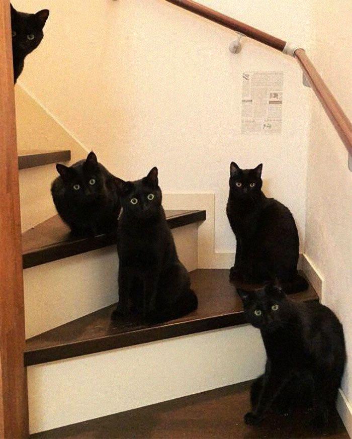 35 adorável gato preto, fotos para mostrar que eles não são má sorte 20