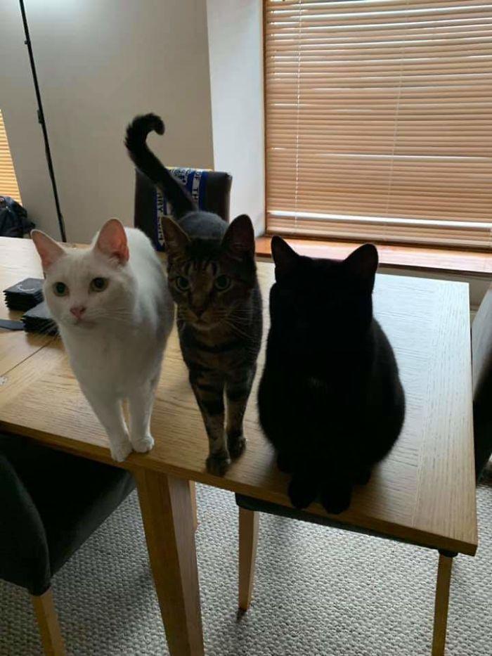 35 adorável gato preto, fotos para mostrar que eles não são má sorte 21
