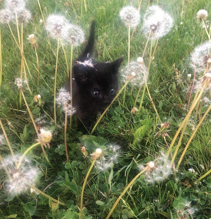 35 adorável gato preto, fotos para mostrar que eles não são má sorte 22