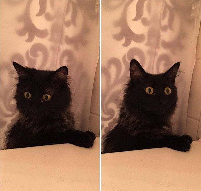 35 adorável gato preto, fotos para mostrar que eles não são má sorte 23