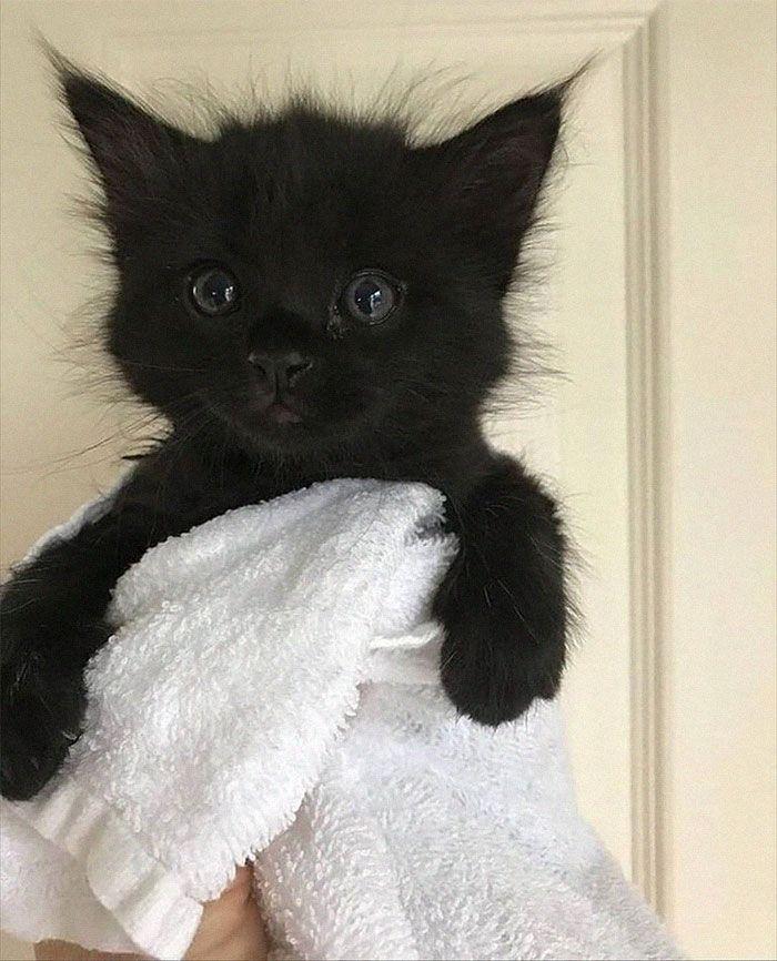 35 adorável gato preto, fotos para mostrar que eles não são má sorte 24