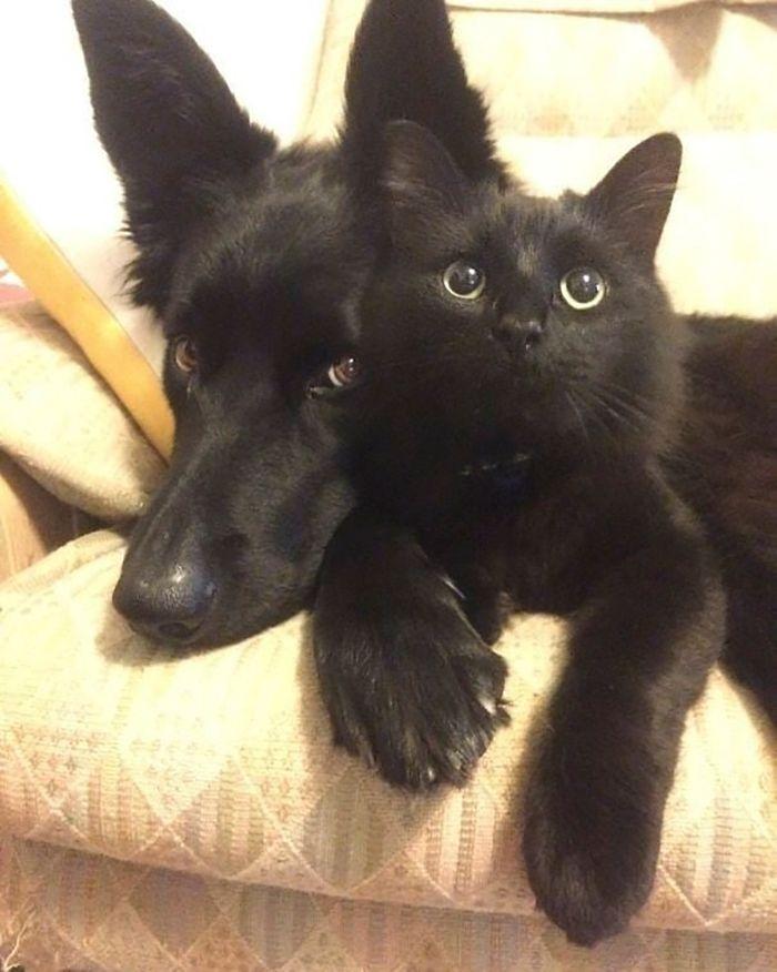 35 adorável gato preto, fotos para mostrar que eles não são má sorte 26