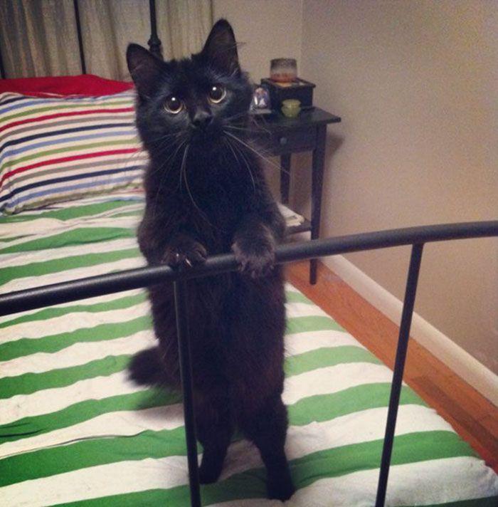 35 adorável gato preto, fotos para mostrar que eles não são má sorte 27