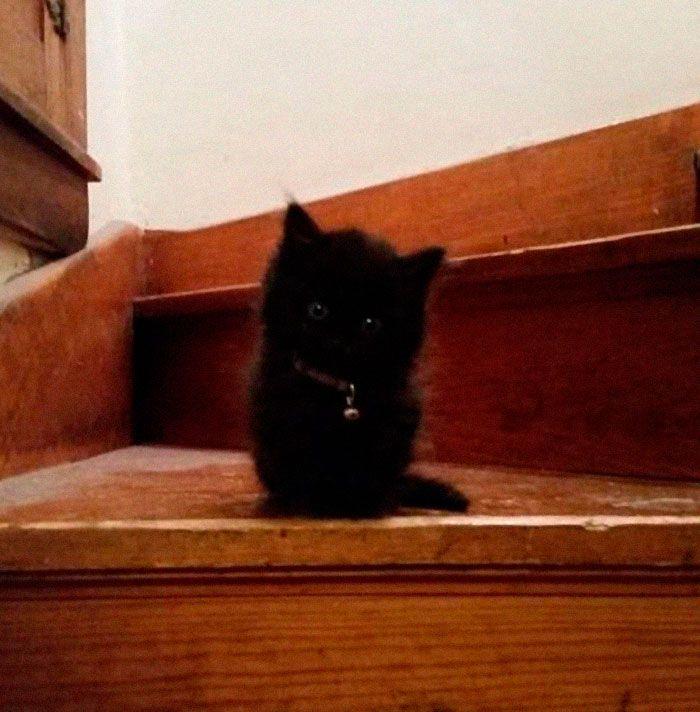 35 adorável gato preto, fotos para mostrar que eles não são má sorte 28